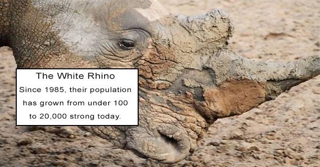 amazing life of animals that make remarkable extinction comebacks