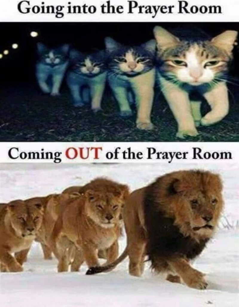 meme - Lion - Going into the Prayer Room Coming OUT of the Prayer Room