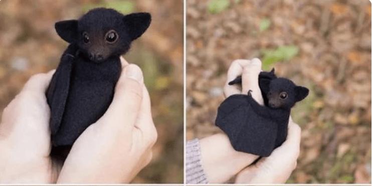 gifs bats cute animals cute animals - 9112581