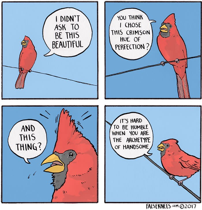 meme - Bird - I DIDN'T ASK TO BE THIS BEAUTIFUL νου THINK I CHOSE THIS CRIMSON HUE OF PERFECTION? IT'S HARD TO BE HUMBLE WHEN YOU ARE THE ARCHETYPE OF HANDSOME AND THIS THING? FALSEKNEES .cOM2017