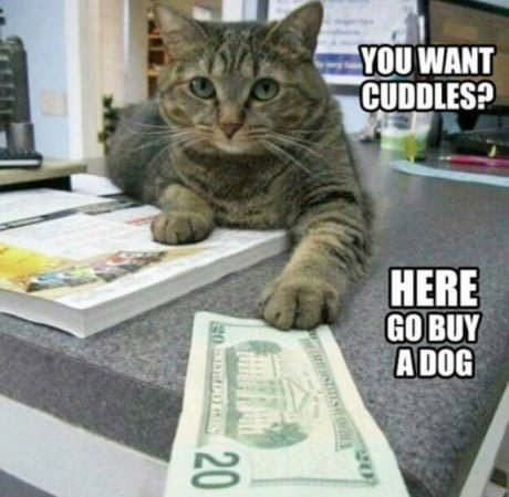 meme - Cat - YOU WANT CUDDLES? HERE GO BUY ADOG 20 g0 OES