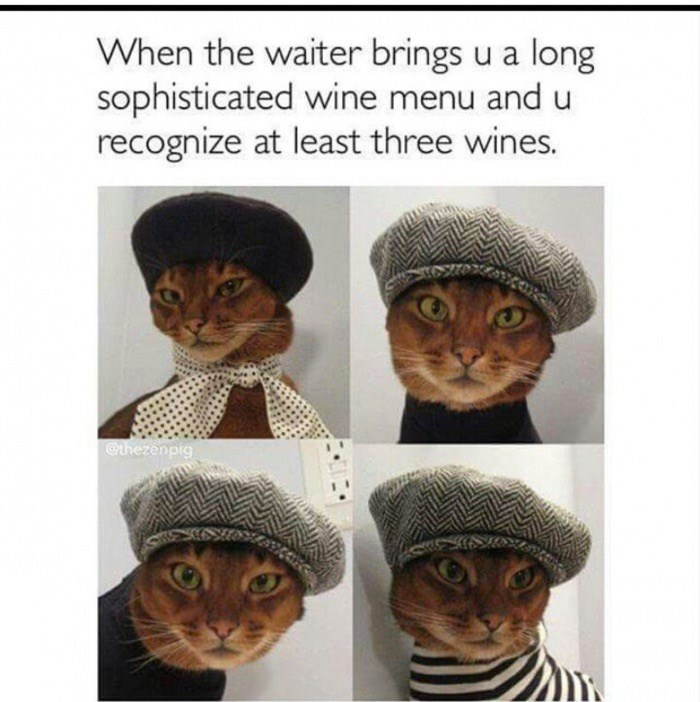 meme - Head - When the waiter brings u a long sophisticated wine menu and u recognize at least three wines. @thezenpig