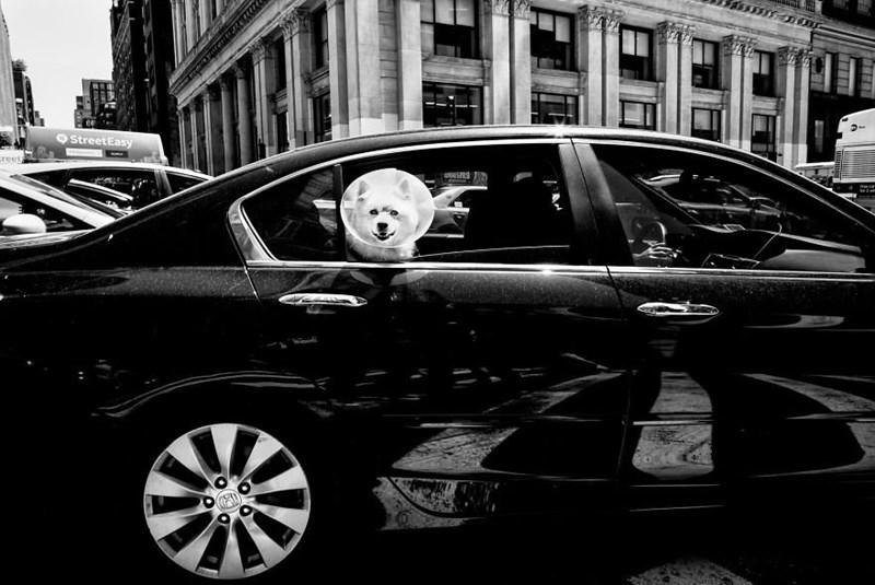 dog pics - Land vehicle - OStreetEasy creet