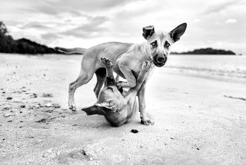 dog pics - Mammal