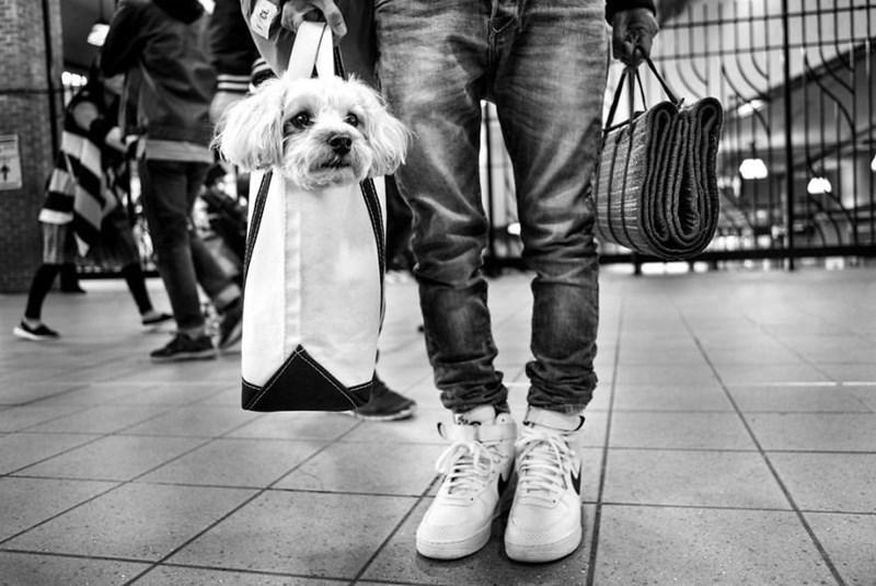dog pics - White