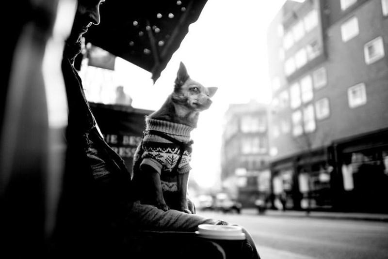 dog pics - Black - E BES ESS