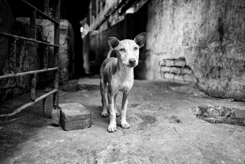dog pics - Black