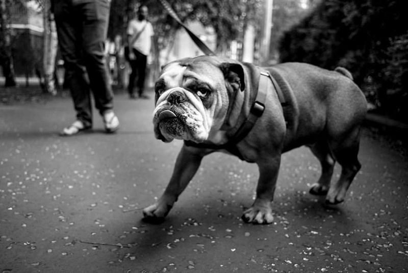 dog pics - Dog