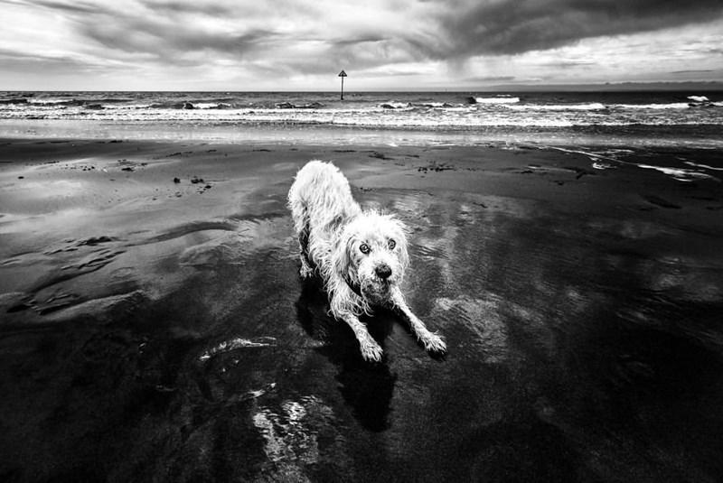 dog pics - Water