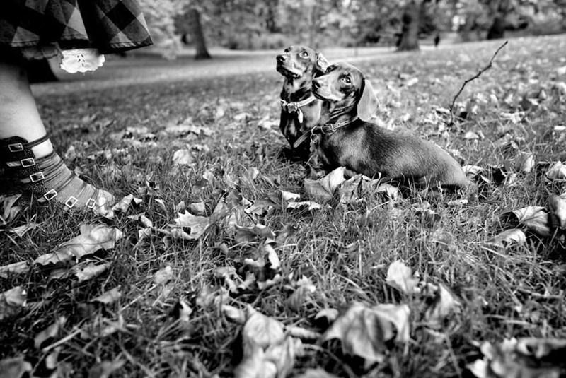 dog pics - Grass