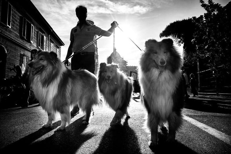 dog pics - Dog - CV