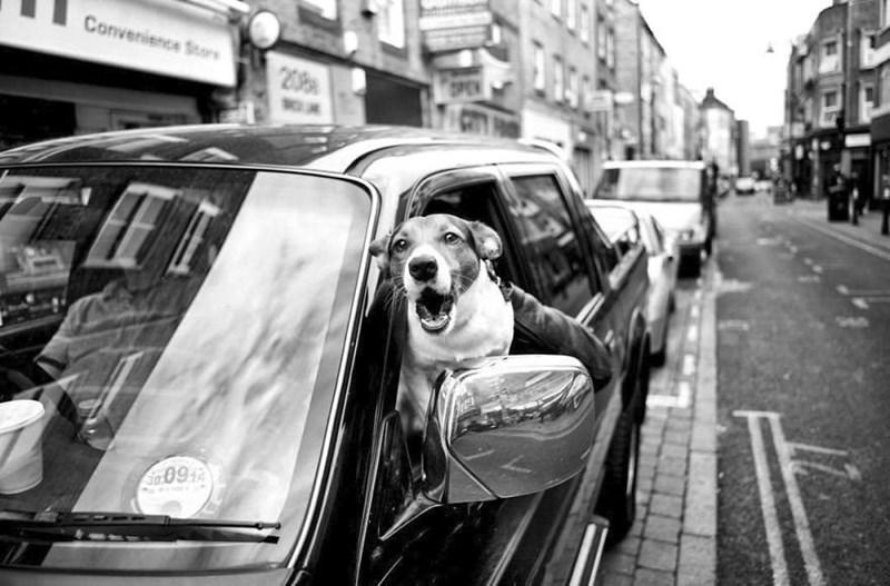 dog pics - Motor vehicle - Convenience Stors 208 OPEN Sa.0914
