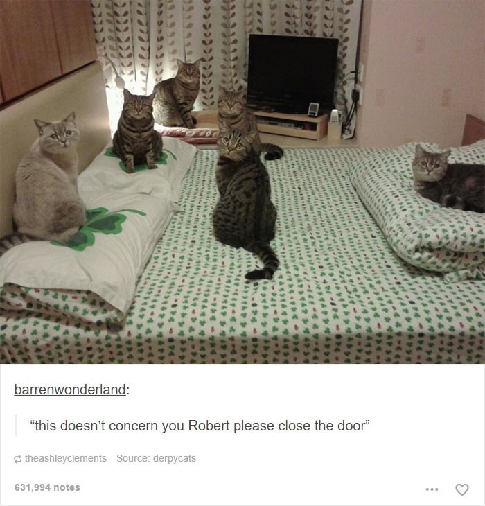 """Cat - barrenwonderland: """"this doesn't concern you Robert please close the door"""" theashleyclements Source: derpycats 631,994 notes heipra ww.e.cee"""