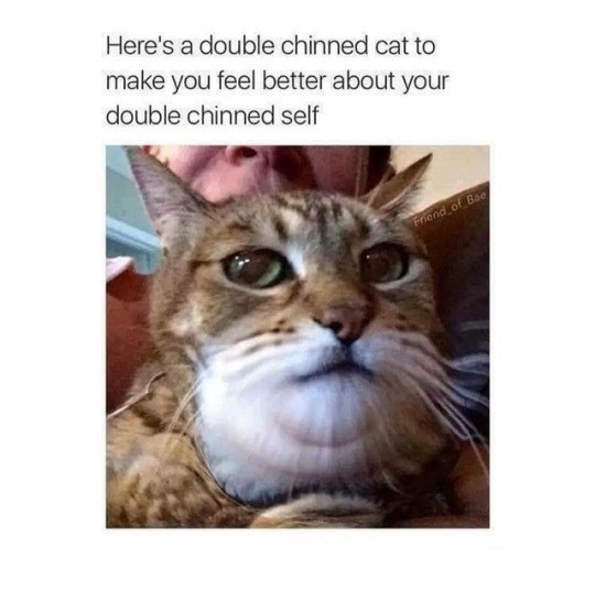 Cat - Here's a double chinned cat to make you feel better about your double chinned self Friend of Bae