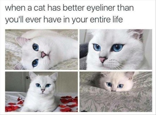 Cat - when a cat has better eyeliner than you'll ever have in your entire life