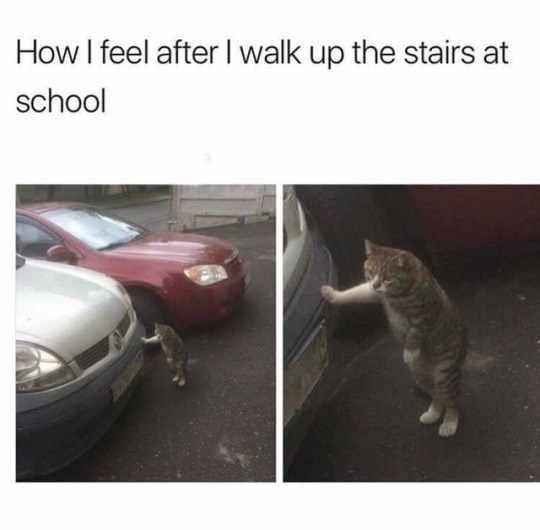 Cat - How I feel after I walk up the stairs at school