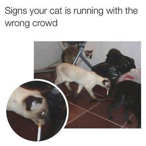 Photo caption - Signs your cat is running with the wrong crowd