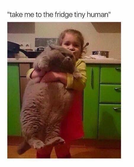 """Cat - """"take me to the fridge tiny human"""""""