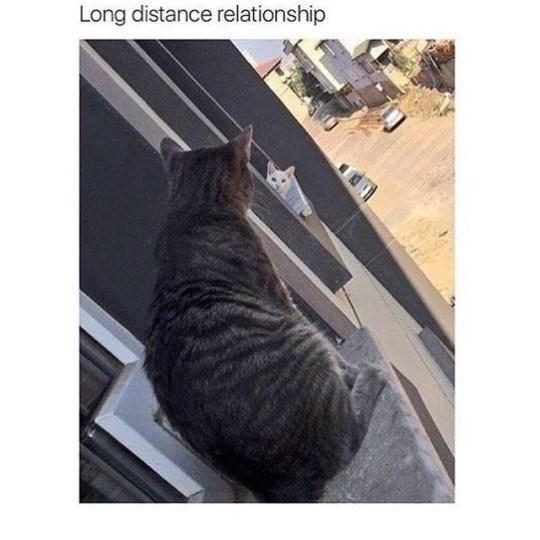 Cat - Long distance relationship