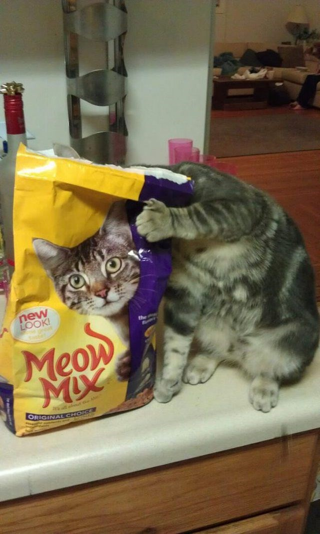 cute cat meme putting its face next to cat food that has a face of a cat on it