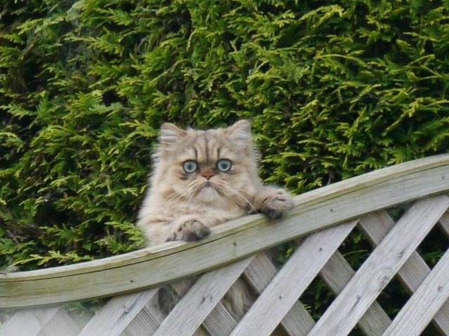 cute cat looking over a fence