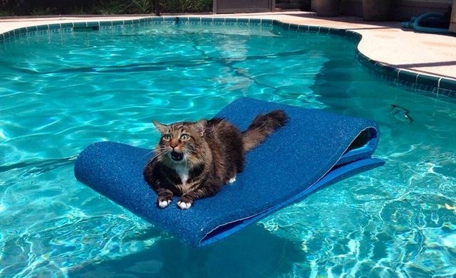 cute cat meme on a floaty in a pool and looks afraid