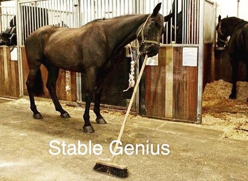 Horse - Stable Genius