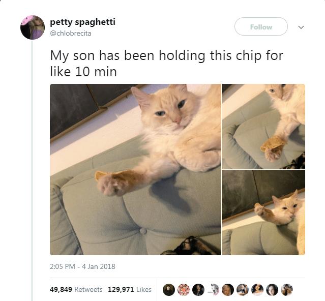 Cat - petty spaghetti Follow @chlobrecita My son has been holding this chip for like 10 min 2:05 PM 4 Jan 2018 49,849 Retweets 129,971 Likes