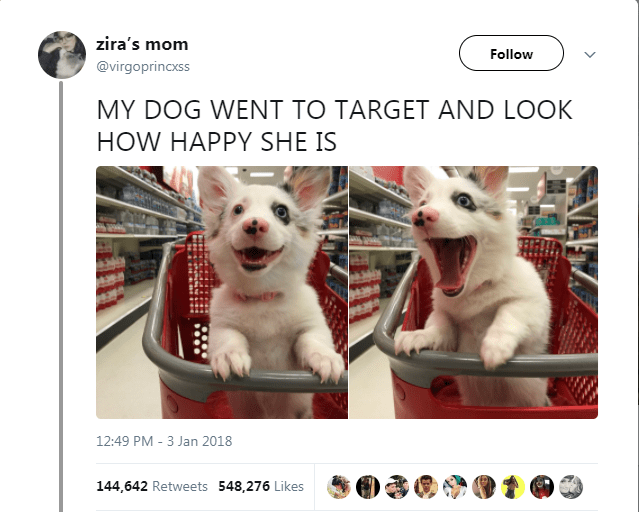 Canidae - zira's mom Follow @virgoprincxss MY DOG WENT TO TARGET AND LOOK HOW HAPPY SHE IS 12:49 PM - 3 Jan 2018 144,642 Retweets 548,276 Likes