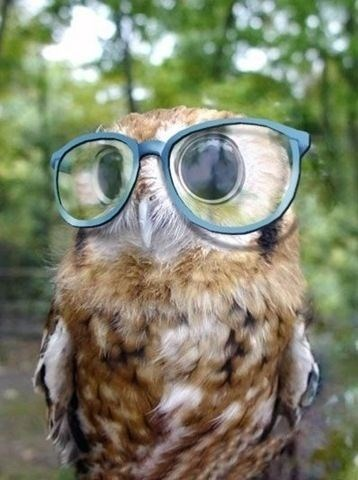 glasses on animals - Owl