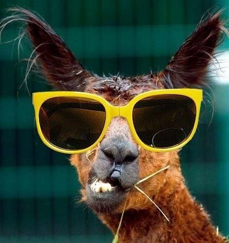 glasses on animals - Eyewear