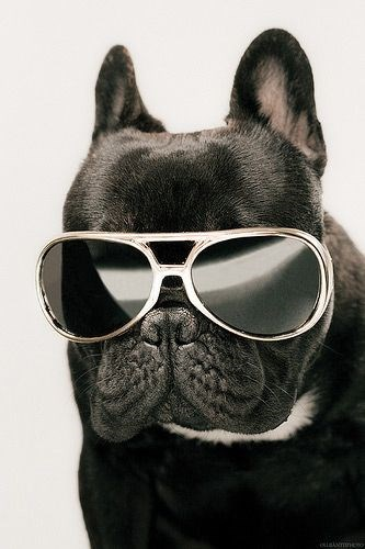 glasses on animals - Eyewear - osiaimne