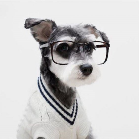 glasses on animals - Dog