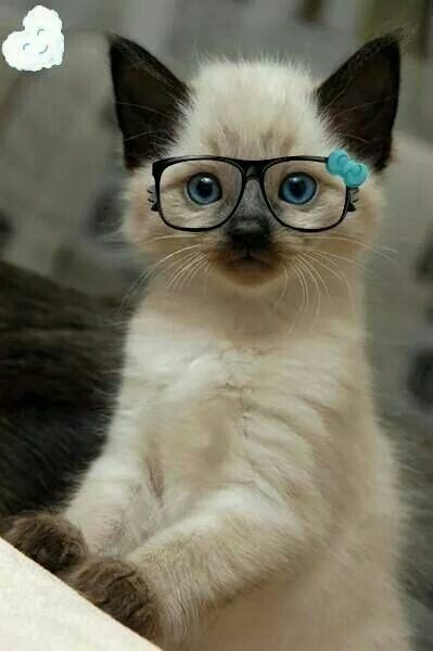 glasses on animals - Cat