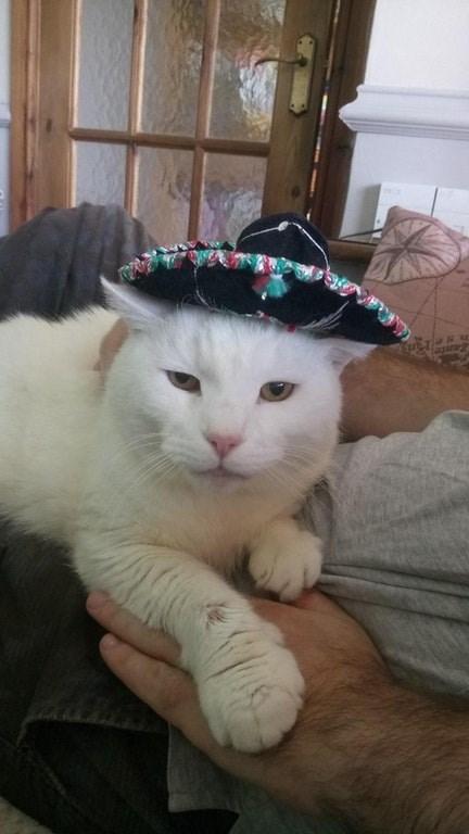 Cat - agae