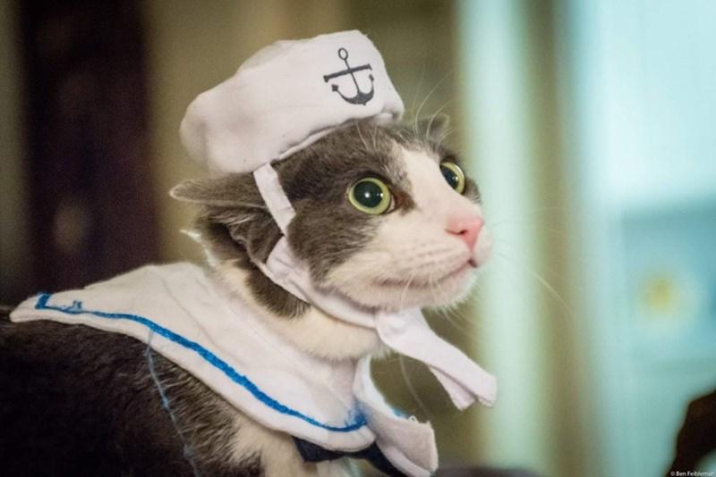 Cat - OBen Feibleman