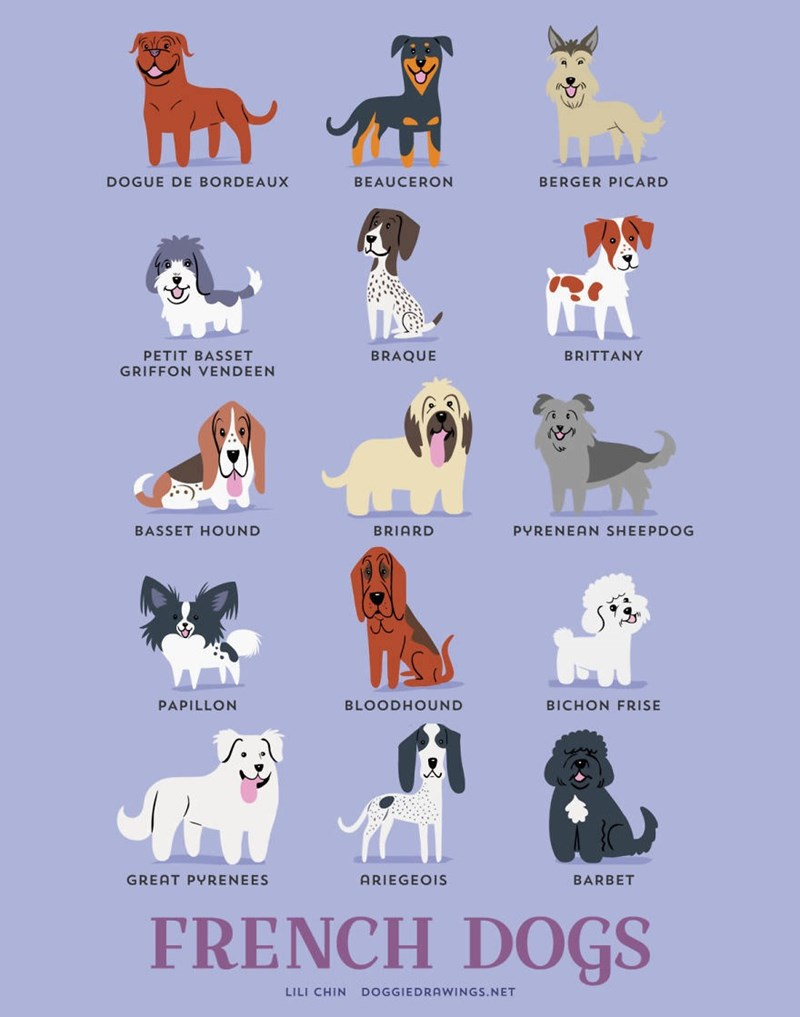 Dog breed - e DOGUE DE BORDEAUX BEAUCERON BERGER PICARD BRAQUE PETIT BASSET BRITTANY GRIFFON VENDEEN BASSET HOUND BRIARD PYRENEAN SHEEPDOG PAPILLON BLOODHOUND BICHON FRISE ARIEGEOIS BARBET GREAT PYRENEES FRENCH DOGS LILI CHIN DOGGIEDRAWINGS.NET