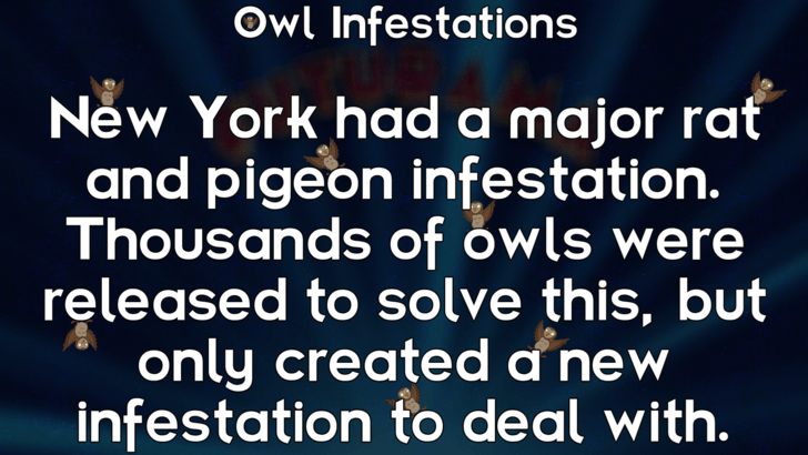 Text - Owl Infestations New York had a major rať and pigeon infestation. Thousands of owls were released to solve this, but only created a new infestation to deal with.
