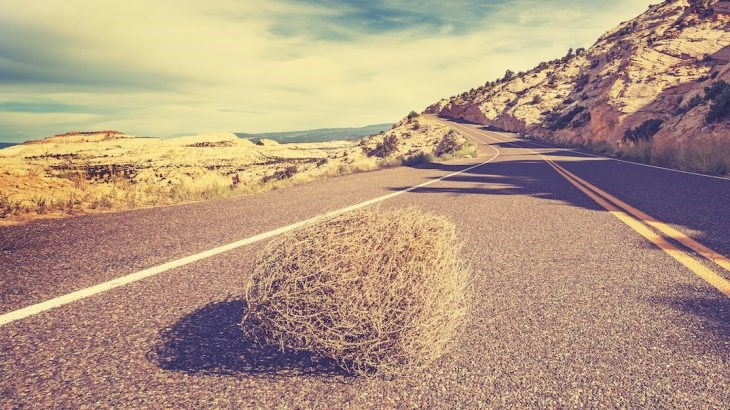 Huge invasive tumbleweed species is taking over California and the US one state at a time