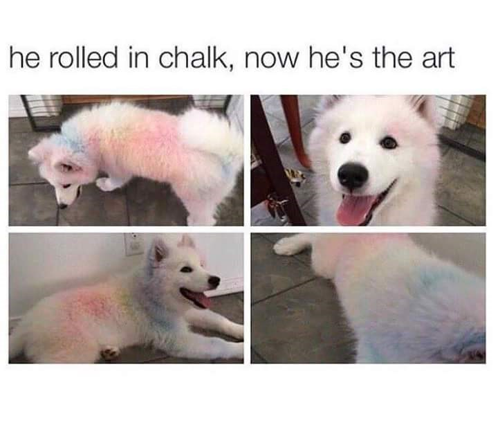 Dog meme of a dog with white fur that rolled in chalk