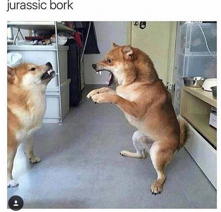 dog meme of two dogs fighting with each other and one looks like a t-rex