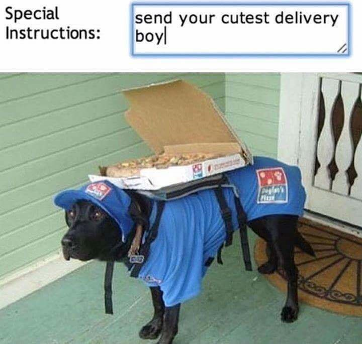 dog meme of a dog that is dressed in a Domino's Pizza delivery uniform