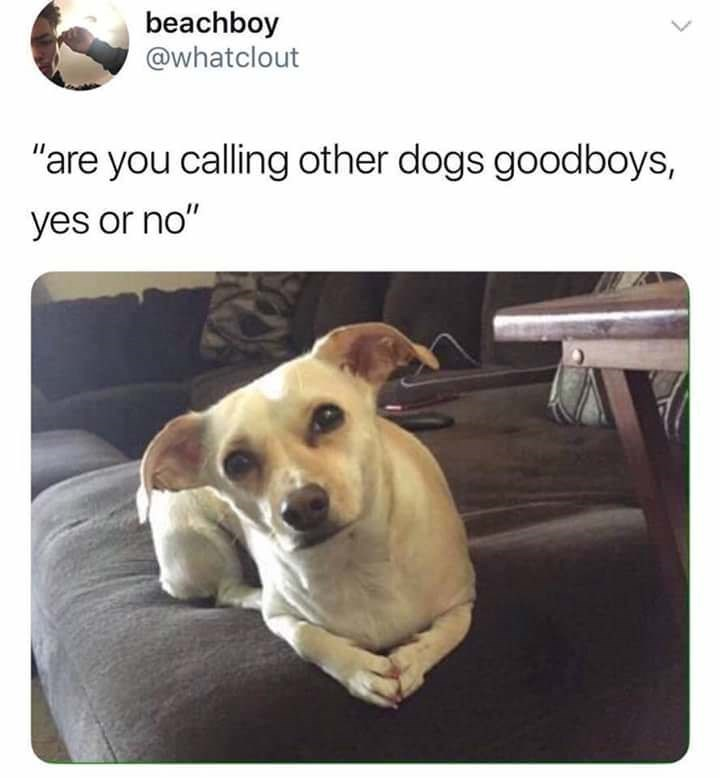 dog meme about a dog that is making sure he's the only one that is being called a goodboy