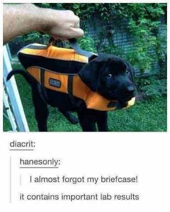 dog meme of a puppy wearing an outfit that has handles