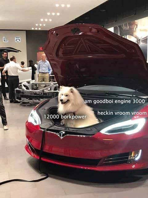dog meme sitting inside of a cars hood