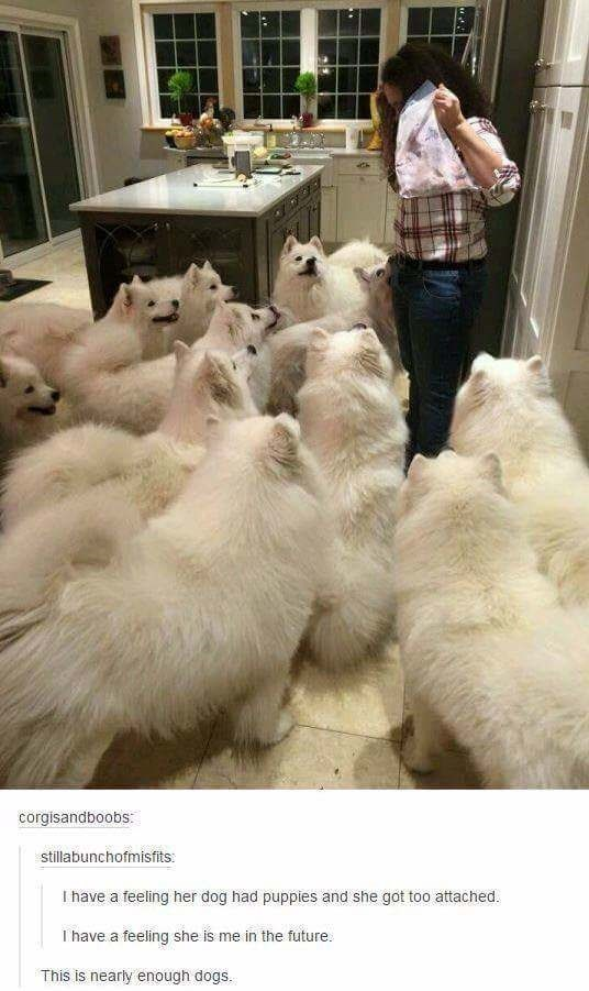 dog meme of one woman feeding over 10 dogs that all look the same