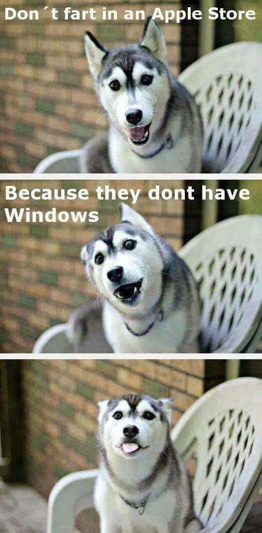 dog meme about not farting in an apple store because they don't have windows