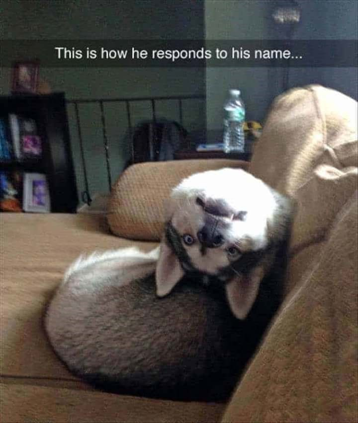 dog meme of a dog that puts his head upside down when he hears his name