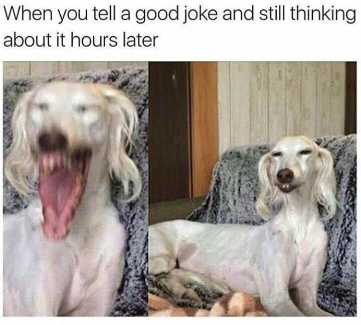 dog meme of a dog that is opening its mouth very widely and then closing it