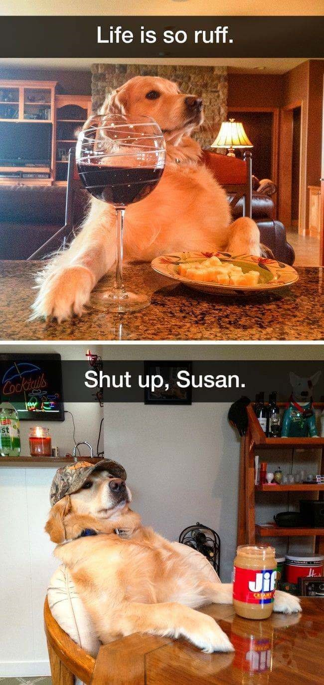 dog meme of a dog drinking wine and then with a container of peanut butter